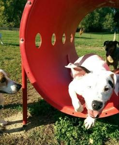 Belleville Dog Park